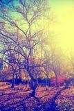 New York City Manhattan Central Park Royalty Free Stock Photography
