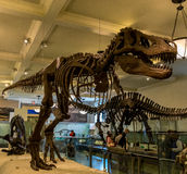 New York City Museum of Natural Sciences Dinosaurs Royalty Free Stock Image