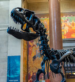 New York City Museum of Natural Sciences Dinosaurs Royalty Free Stock Photography