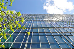 New York City Office Buildings. An office building with branches from a tree Royalty Free Stock Photos
