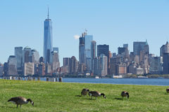 New York city skyline with green meadow and geese Stock Image
