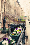 New York city Spring Royalty Free Stock Photography