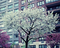 New York city Spring Stock Photo