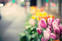 New York City Spring Royalty Free Stock Photo