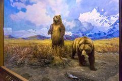 New York CITY, United States of America - May 01, 2016: The American museum of Natural History Stock Images