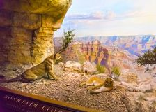 New York CITY, United States of America - May 01, 2016: The American museum of Natural History Royalty Free Stock Photo