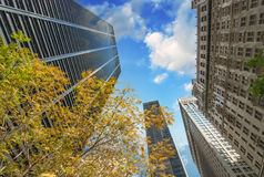 New York City. Upward view of Manhattan Buildings with trees. And sky Stock Photos
