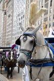 New York City vagnshäst Royaltyfri Fotografi