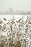 Winter New York City USA Royalty Free Stock Images