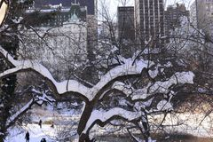 New York Citys Central Park in Winter Royalty Free Stock Photo