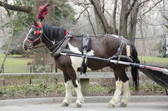 New- York Citywagen-Pferd Stockfoto