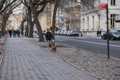 New York, de V.S. - 3 Januari, 2019 Mens die met een hond bij de straat van NYC lopen levensstijl stock afbeelding