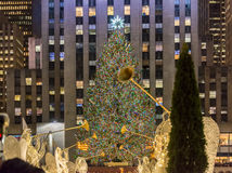 New York - DECEMBER 20, 2013: Christmas Tree at Rockefeller cent royalty free stock images