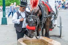 NEW YORK, EUA - 5 DE MAIO DE 2018: Um transporte do cavalo e do carrinho com o cocheiro no Central Park em New York City foto de stock