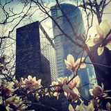 New York finance industry skyline with magnolia leaves. New York financial district skyline behind a backdrop of magnolia spring blooming flowers Stock Photo