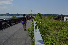 New York Highline fotografie stock libere da diritti