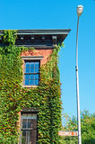 New York: a house covered in ivy in Greenwich Village on September 15, 2014 Stock Photos