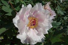 New York jardin botanique 11 mai #8 Photographie stock libre de droits