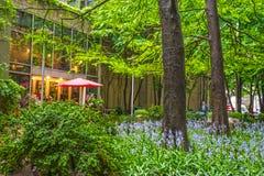 Beautiful City Park royalty free stock image