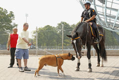 New York Mounted Police Royalty Free Stock Photography
