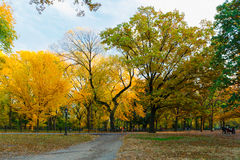 New York outdoors. Fall autumn Royalty Free Stock Images