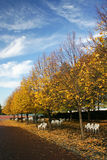 New york park Fall colors. Fall colors and blue sky in a New York park Stock Photography