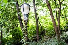 New York Park Royalty Free Stock Photography