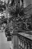 New York Planter. An old sidewalk planter with ferns and English ivy on the East side of Manhattan royalty free stock photography