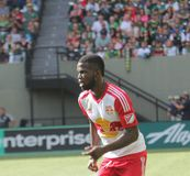 New York red Bulls Royalty Free Stock Photography