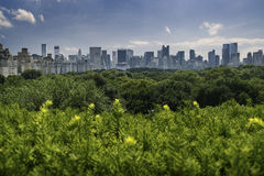 New York skyline. View across trees of Central Park Royalty Free Stock Image