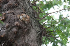 New York squirrel. In central park Stock Photo