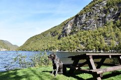New york state  cascade  lakes  essex county dog Stock Photography