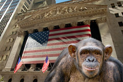 New york stock exchange. Portrait of a chimpanzee in front of the new york stock exchange building. Inveting concept royalty free stock image