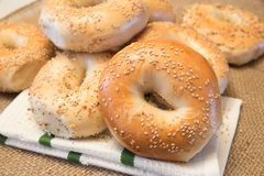 New York Style sesame seed bagels Stock Photos