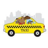New York taxihund Royaltyfria Bilder
