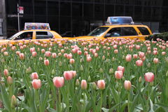 New York taxis & tulips Stock Images
