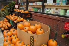 Pumpkin sold in the street royalty free stock photography