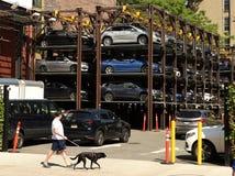 New York, USA - 24. Mai 2018: Fußgänger mit Hund nahe Öffentlichkeits-PA Lizenzfreie Stockbilder