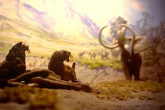 New york, USA, November 2018 - prehistoric hunting scene with mammoths and smilodons. Reconstruction of mammoth and saber-toothed tiger royalty free stock images