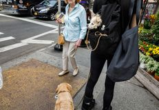 Dogs in New York City Royalty Free Stock Image