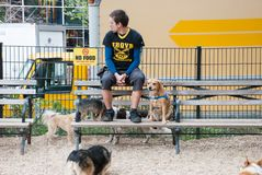The dog walker and his playing dogs at Union Square, New York City. Usa stock image
