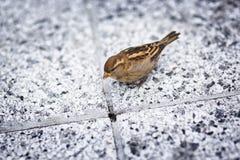 New York - Vogel Lizenzfreies Stockfoto