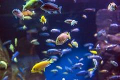 New- Yorkaquarium Stockfotografie