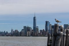 New- Yorklower manhattan-Skyline von Liberty Island mit Seemöwe Stockfotos