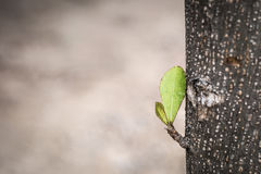 New young Shoots on the Tree. Royalty Free Stock Images