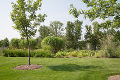 New Young Tree in Formal Garden Royalty Free Stock Photo