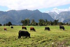 New Zealand Stock Photo