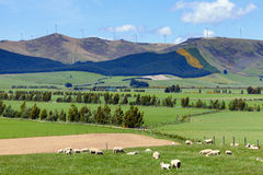 New Zealand agriculture Stock Photo