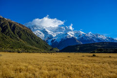 New Zealand 61 Royalty Free Stock Photography
