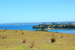 New Zealand. Beautiful picture of lovely New Zealand Royalty Free Stock Photography